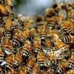 mlm selling tips bee image