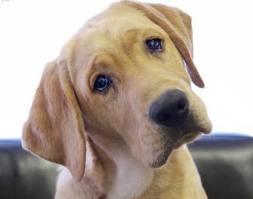 understand your niche dog head